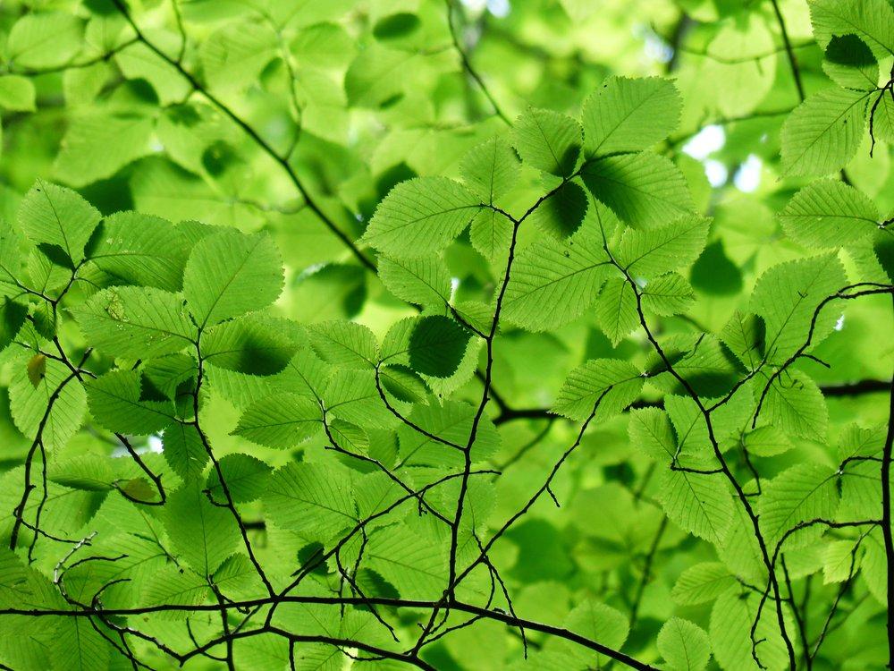 tree-nature-grass-branch-plant-sunlight-1019167-pxhere.com.jpg