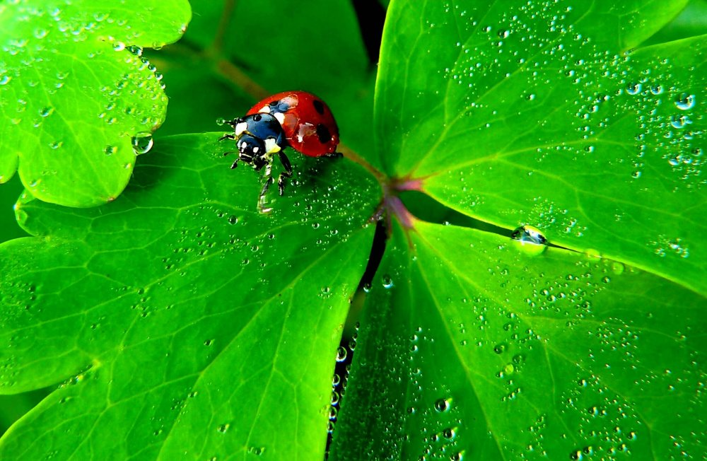 water-nature-dew-plant-photography-leaf-984228-pxhere.com.jpg
