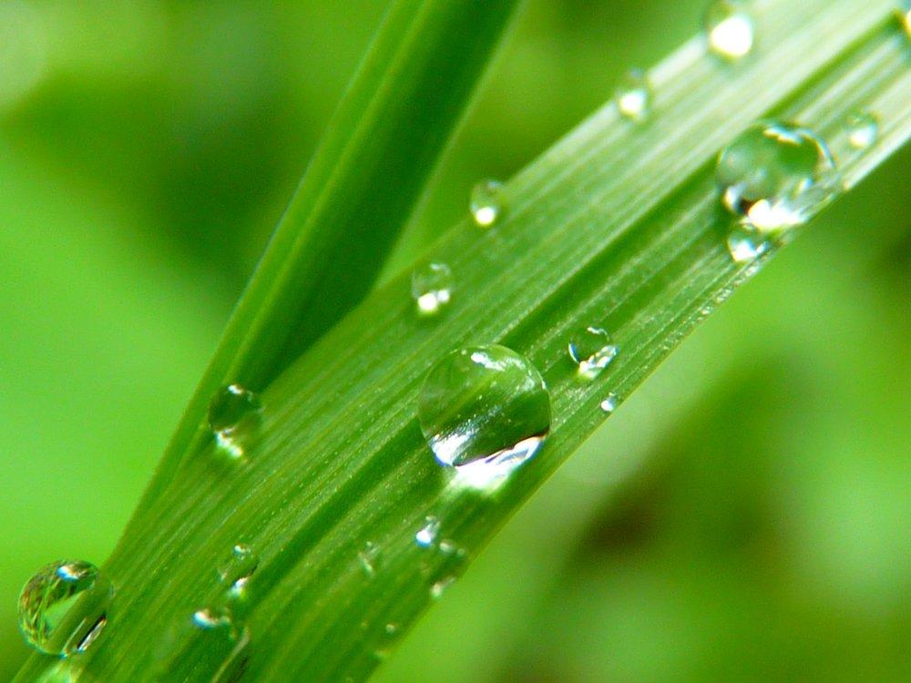 water-nature-grass-drop-dew-plant-1155619-pxhere.com.jpg