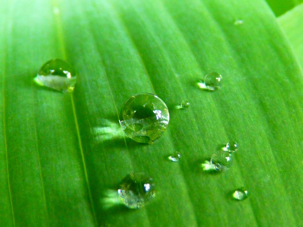 water-nature-grass-drop-dew-plant-1155632-pxhere.com.jpg