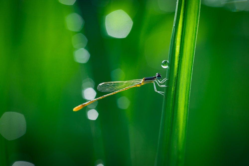water-nature-grass-droplet-drop-dew-1169791-pxhere.com.jpg