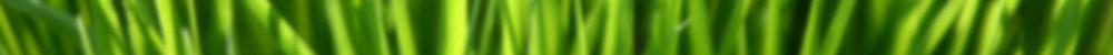 AGZA_IMG_GRASS_BLUR_STRIP_2000x100.png