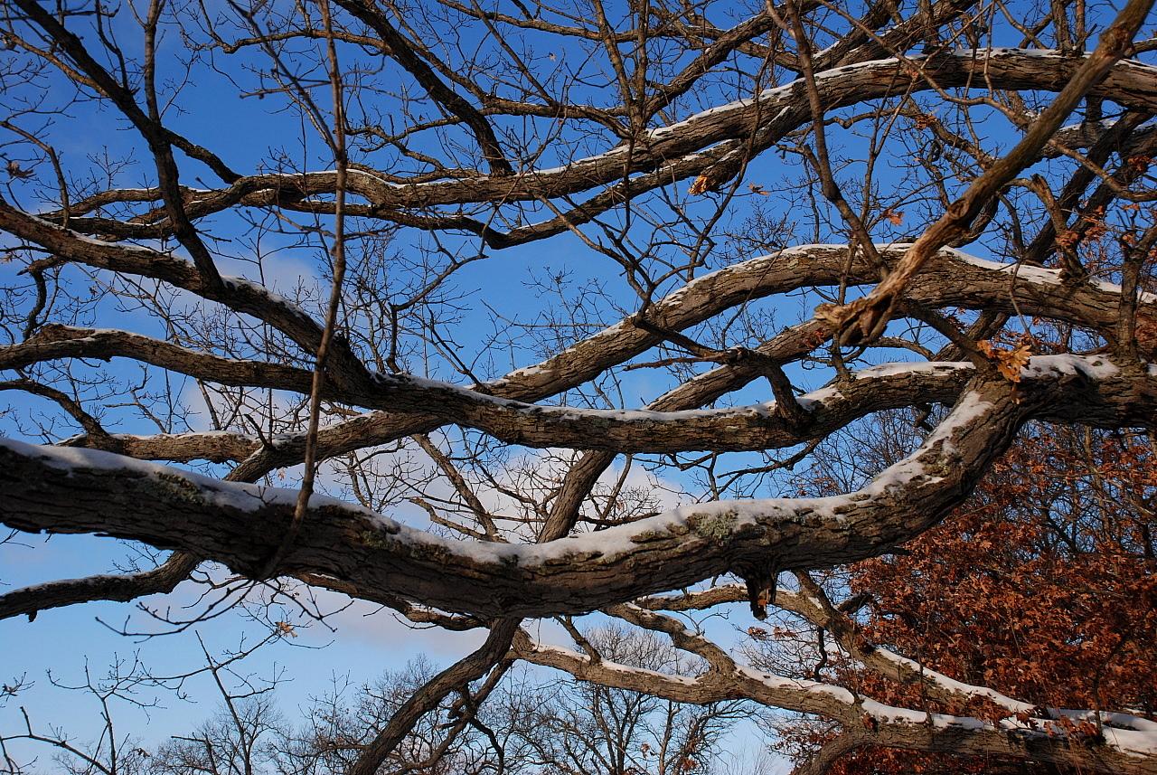 hra-tree-010809-1280x1024