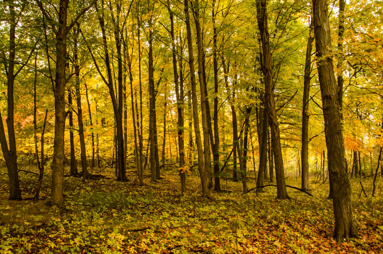 Haven Hill Forest Yellow Colors