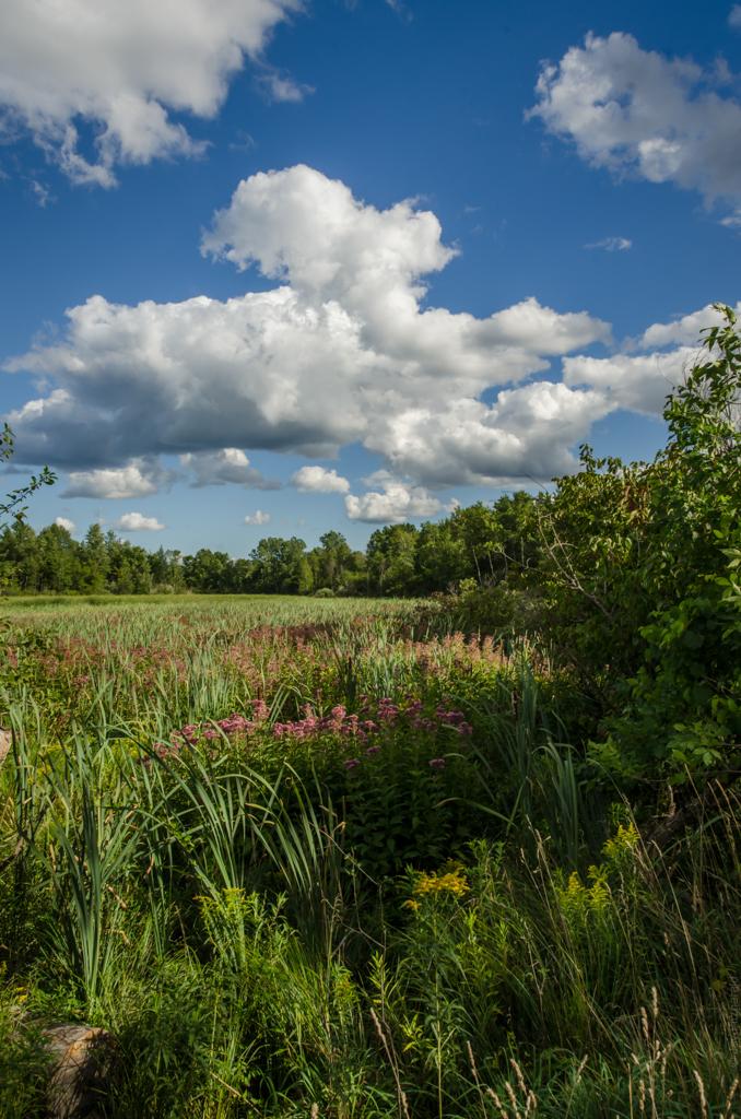 Cedar Creek Wetland - 081712 - JLF - DSC_7361.jpg