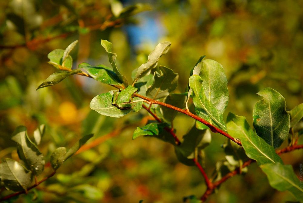 Disguised Tree Frog - JLF - 082408 - DSC_0144.jpg