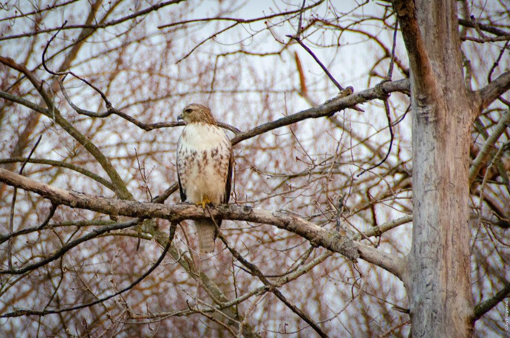 Hawk Audubon Group Hike HSRA 040519.jpg