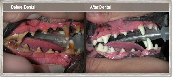 dentalbeforeandafter.jpg