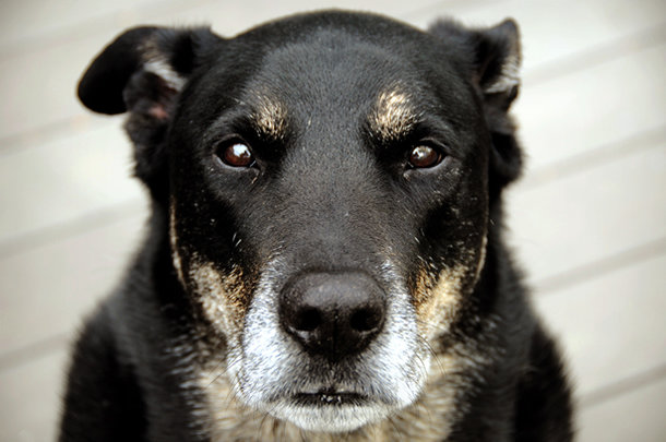 Our senior pets need the love: regular health checks will help them stay healthy...