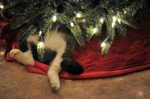 42668-Cat-Under-The-Christmas-Tree.jpg