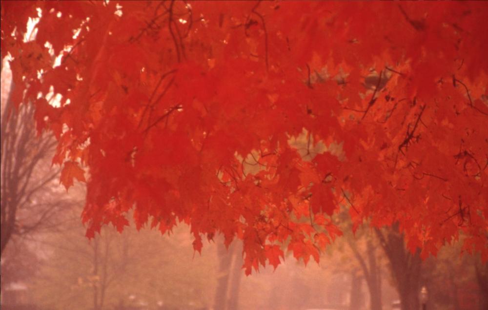 chakras & color - exploration of the chakra systems & healing hues
