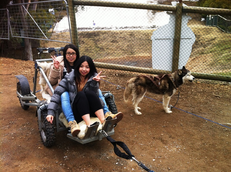 Evar and Tiffany husky dog rides.jpg