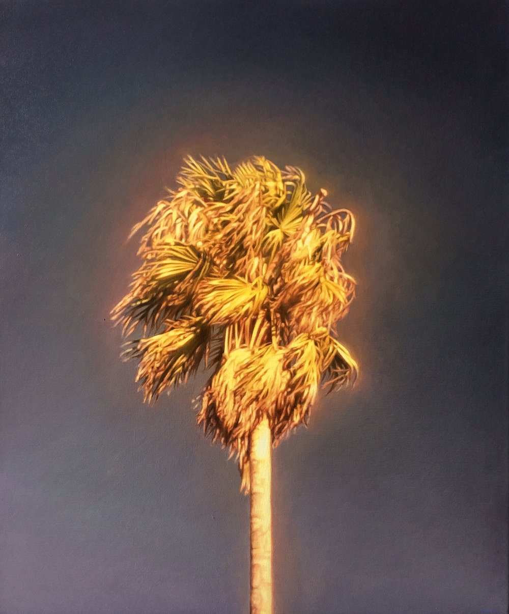 James Bonnici, Palm (Preston) oil on linen, 51 x 61 cm, available