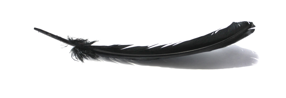 feather 2.jpg