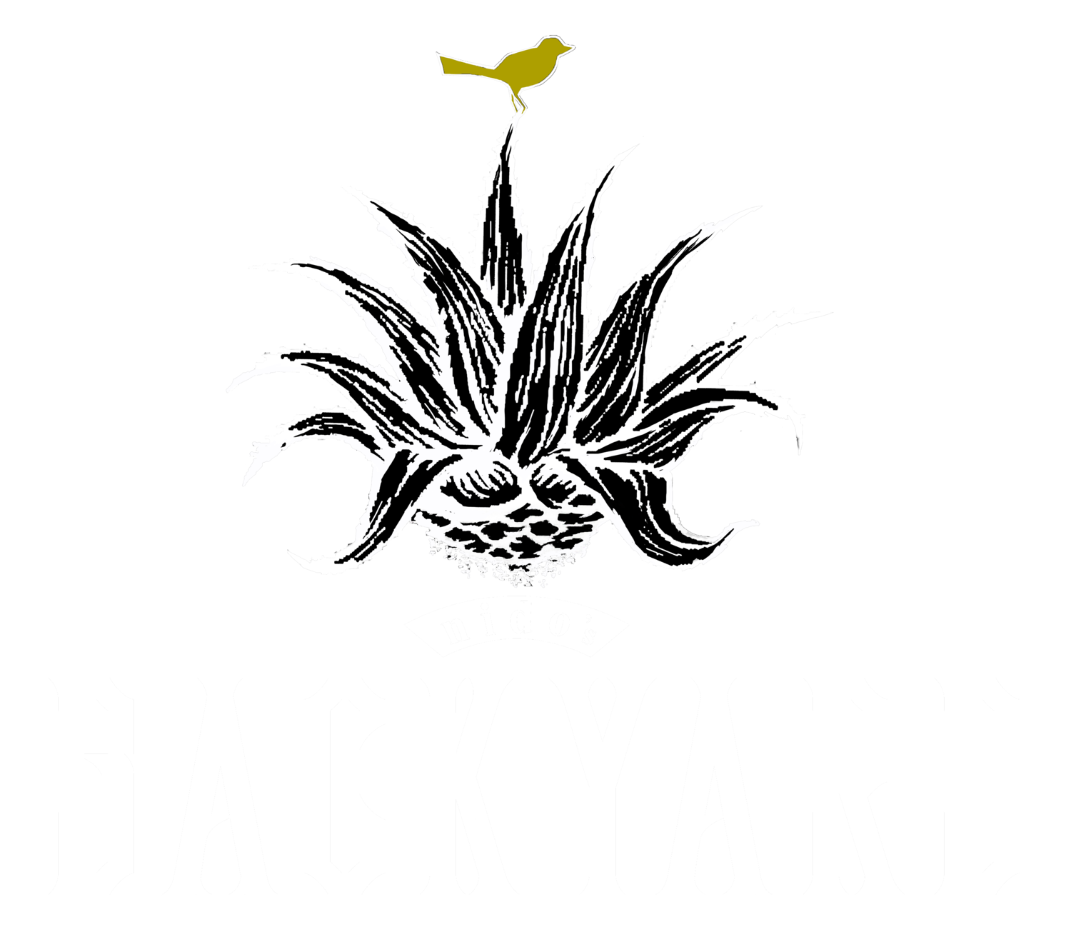 THE BACKYARD - OAKLAND