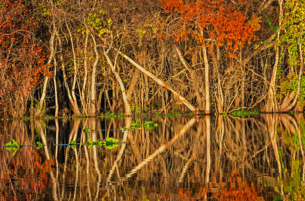 Fall Reflections with Tree Patterns, St. Johns River