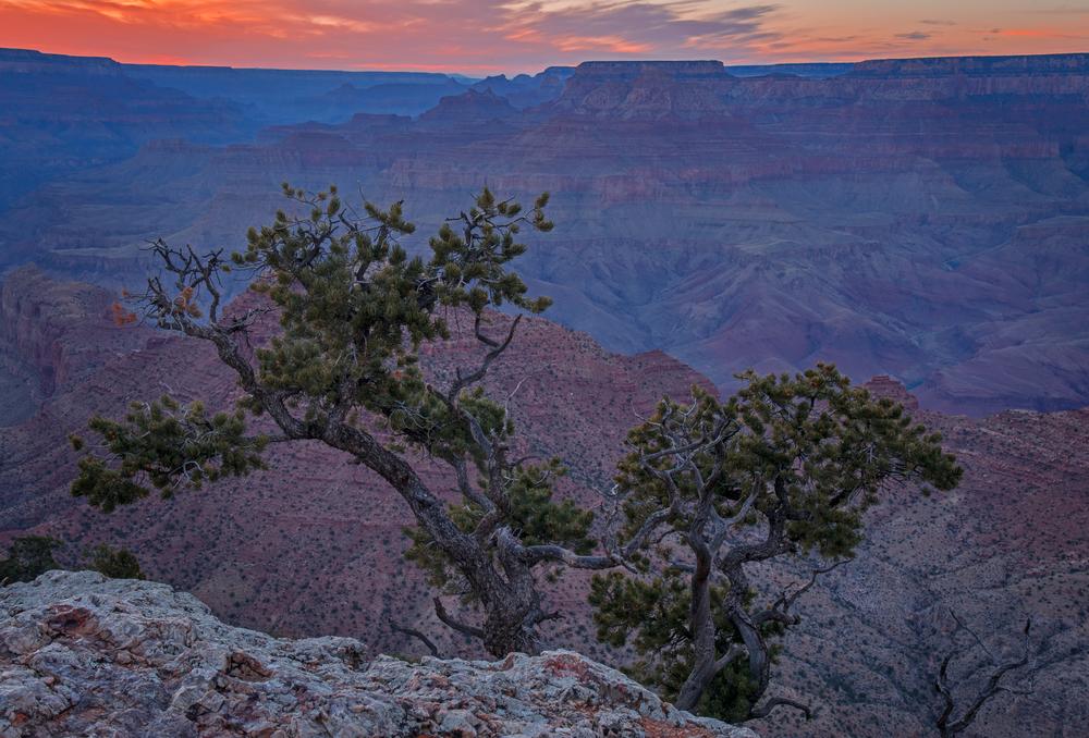 Juniper Framing the Canyon