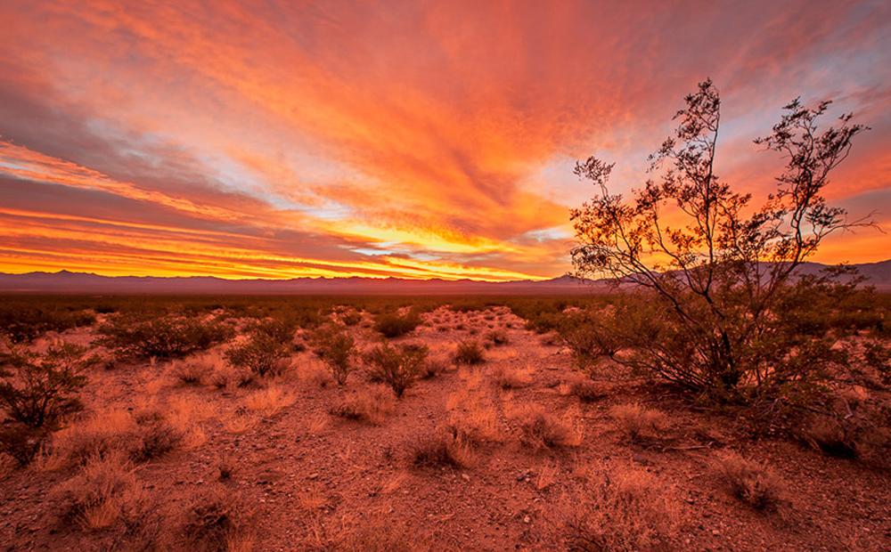 Mojave Desert Sunrise