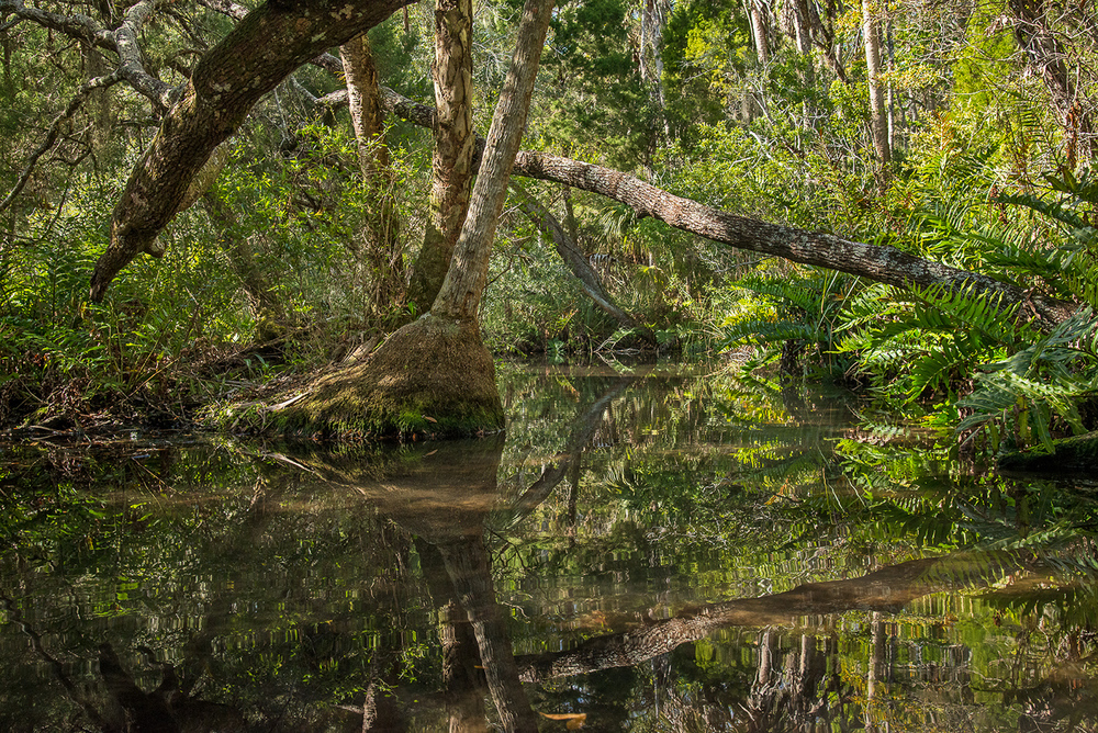 Baird Creek, Primeval Paradise (off the Chassahowitzka River)