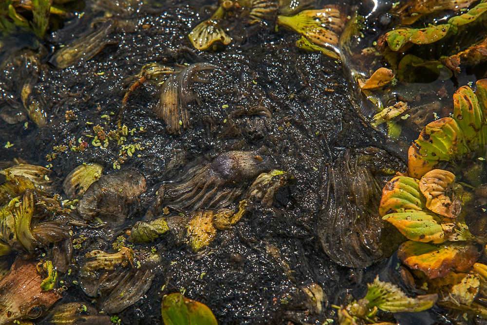 Caloosahatchee Decomposition