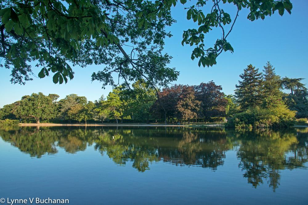 Reflections through the Branches, Bois de Boulognes