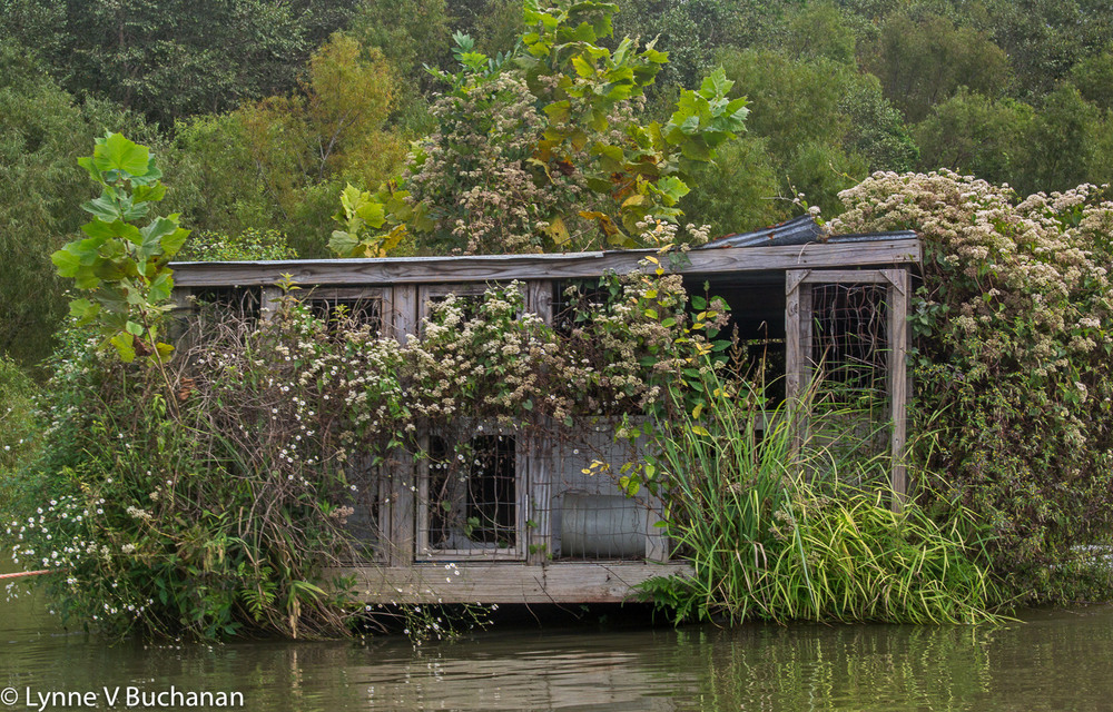 Floating House Gone Back to Nature