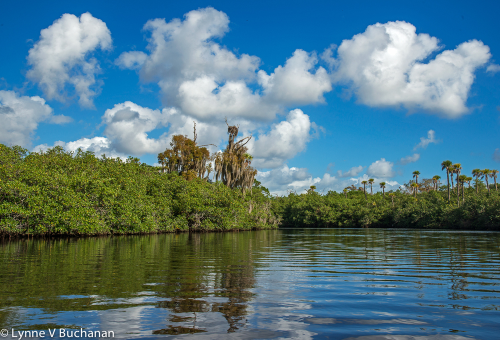 Loxahatchee with Clouds and Osprey Nest