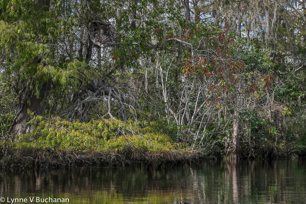 Hints of Fall on the Loxahatchee