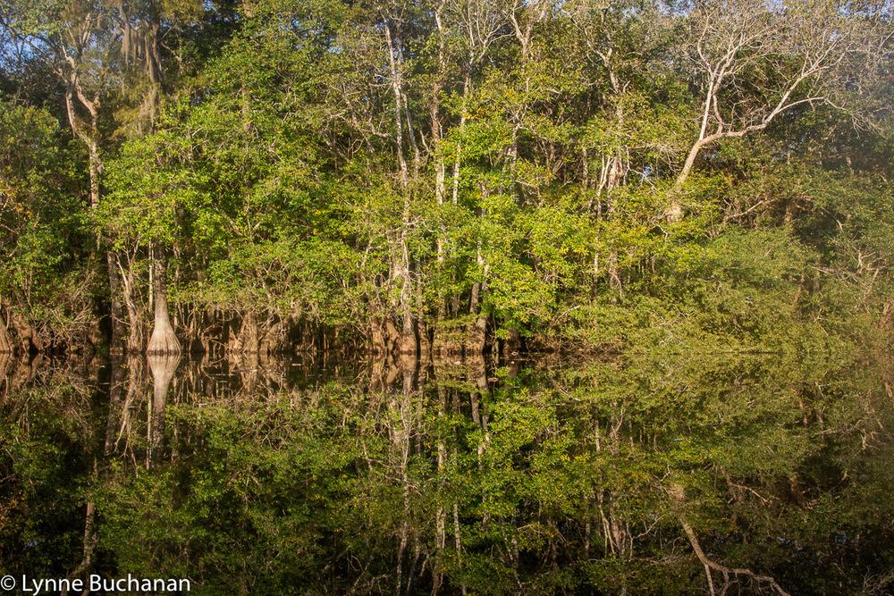 Owl Creek Reflections