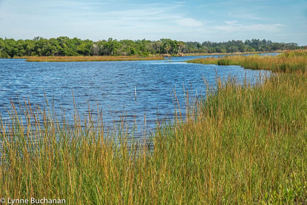 Older Phase of the Rock Pond Restoration Project