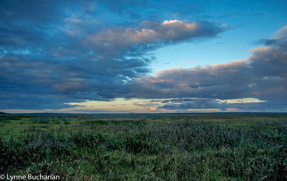 Paynes Prairie at Dusk