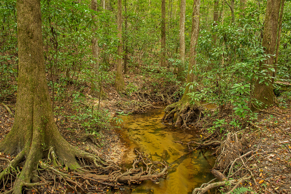 Stream in the Apalachicola Bluffs and Ravines Preserve