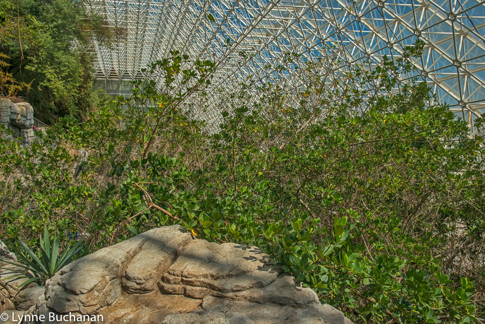 Everglades Mangroves in Biosphere 2
