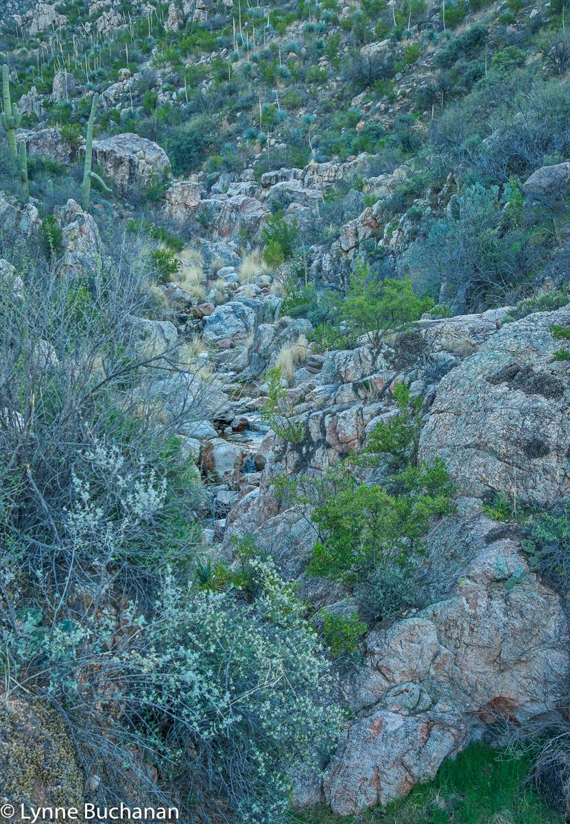 Catalina Mountain Stream
