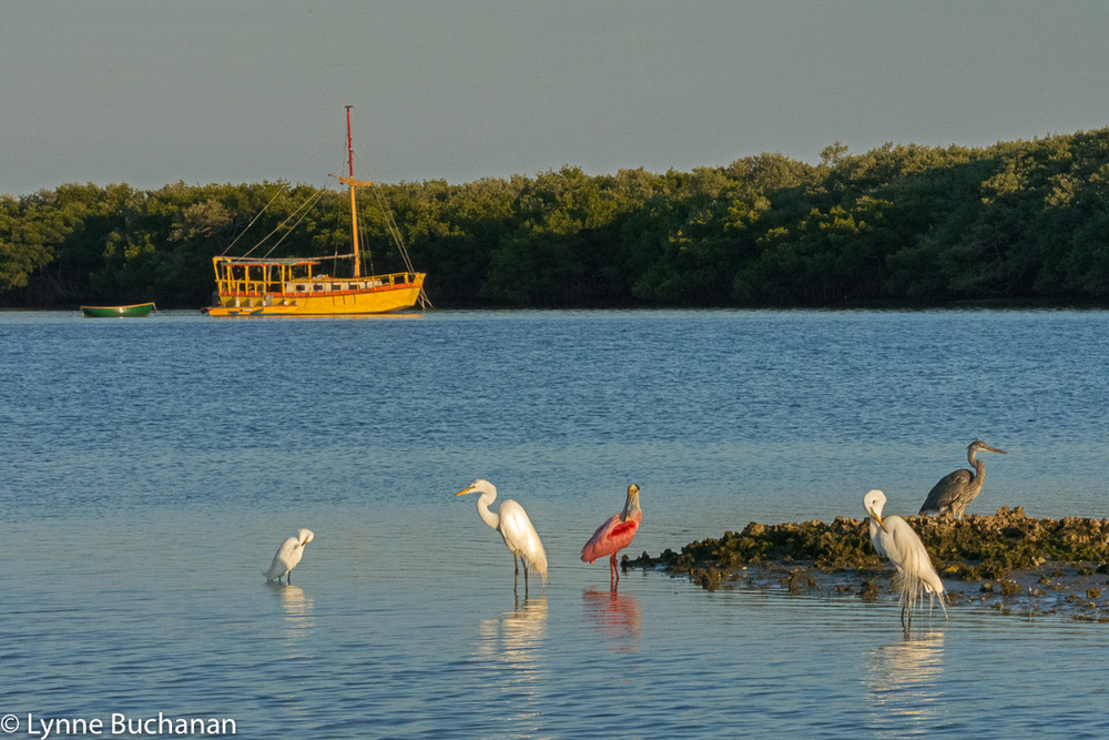 Shorebirds and Yellow Boat, Cortez Village