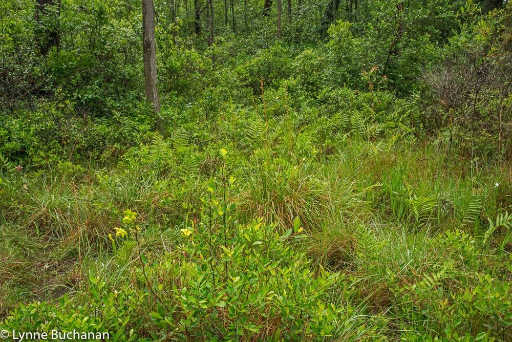 Green Swamp Wonderland