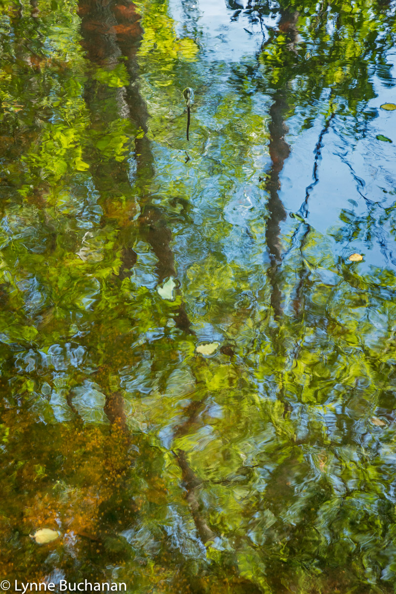 Reflections with Leaves, Lumber River