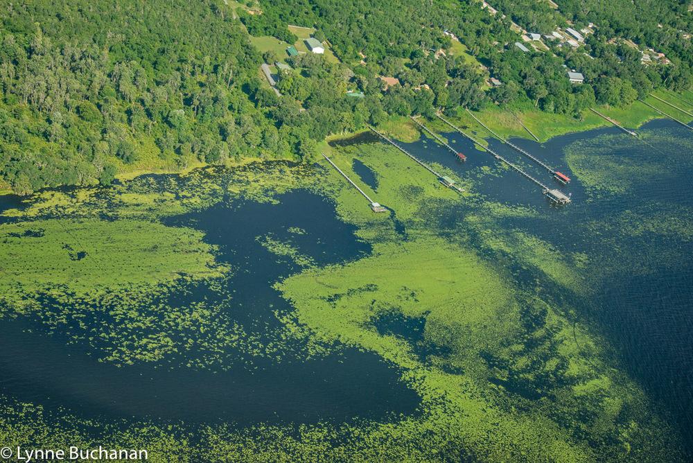 West Shore of Lake George with Docks, Emergent Vegetation and Algae