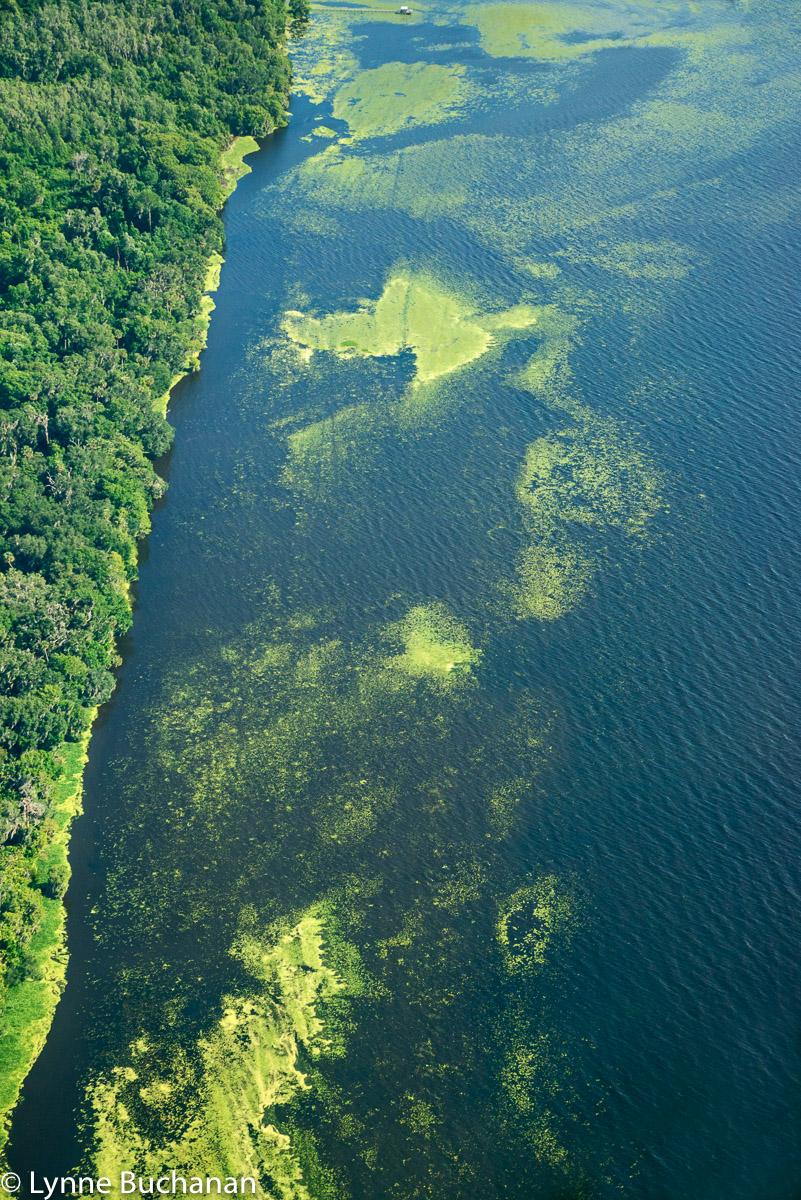 West Shore of Lake George with Vegetation and Algae