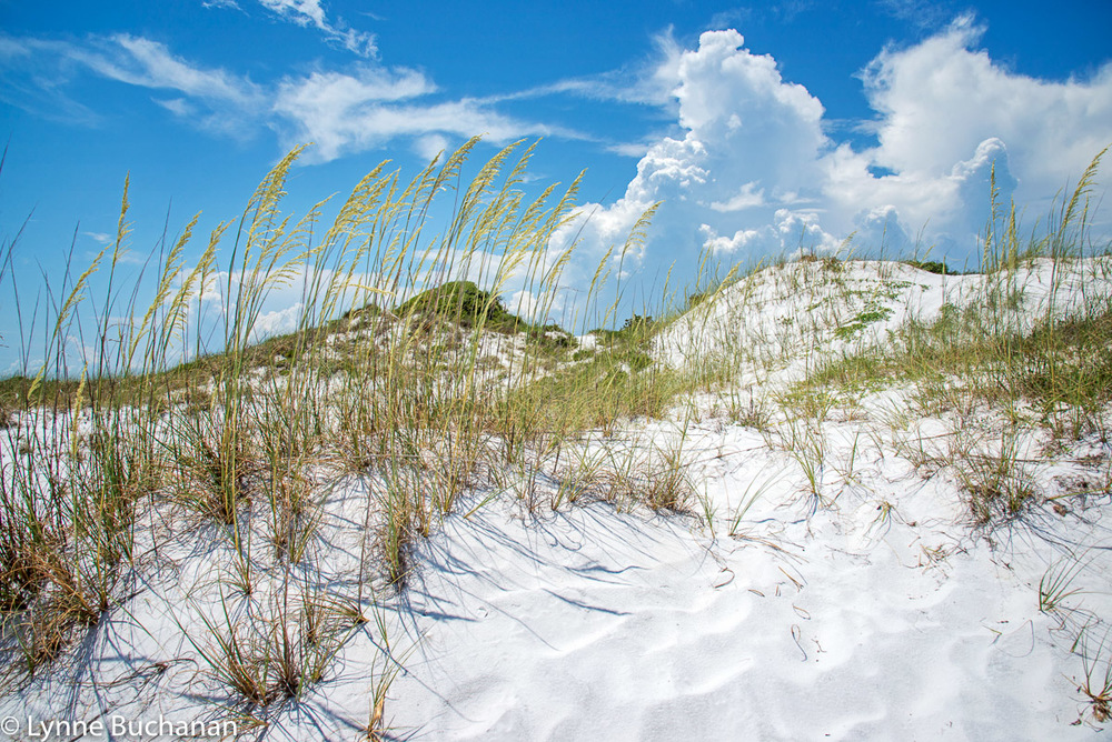 Sea Oats, Clouds, and Dunes, Pensacola Beach Bayside