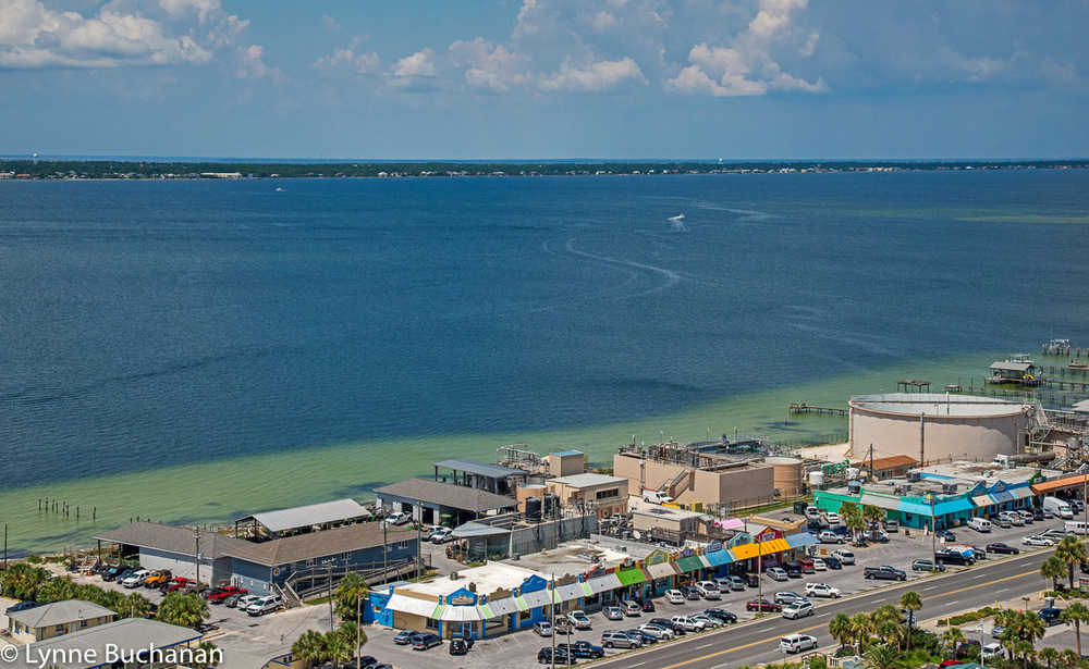 Proximity of the Pensacola Water Treatment Plant to Escambia Bay