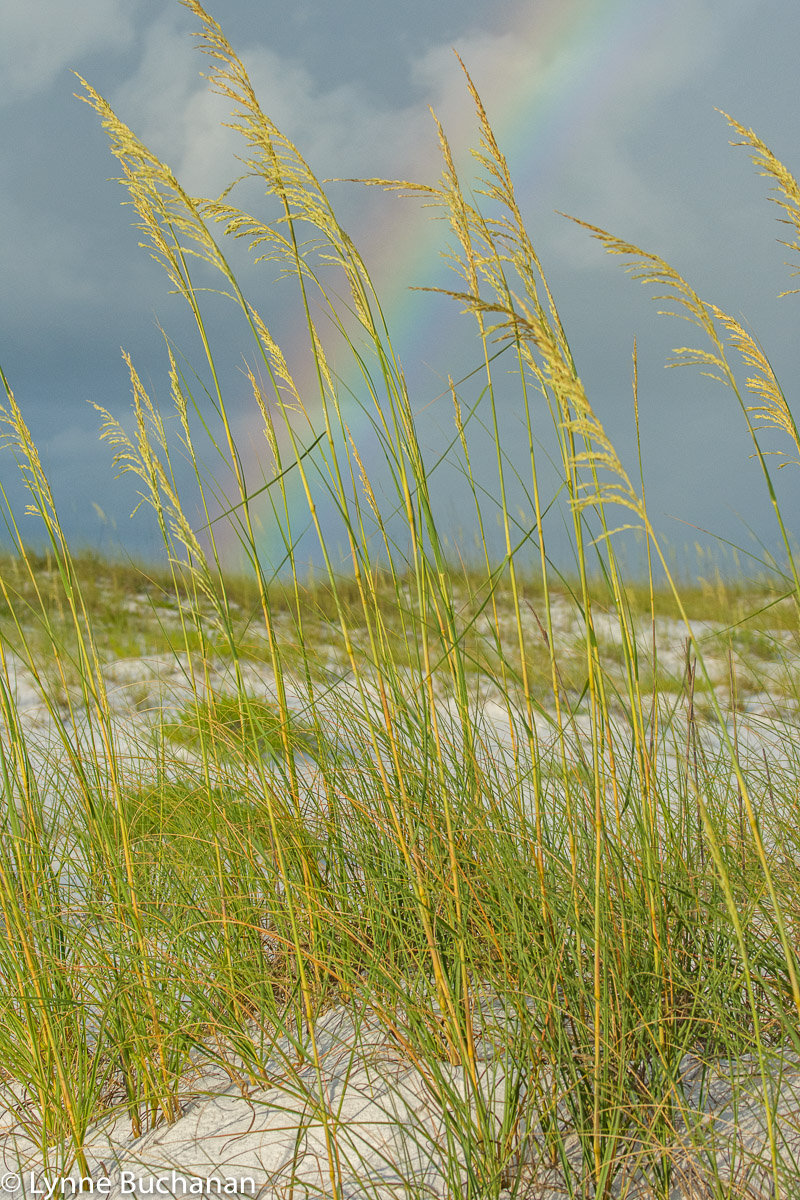 Rainbow through the Sea Oats, Gulf Islands National Seashore