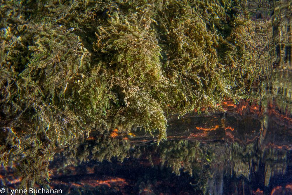 Alien Cypress Trunk Resembling a Cave