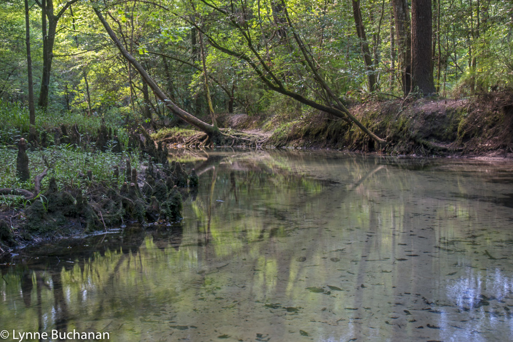 The Ponce de Leon Spring Run Heading Towards Salt Creek