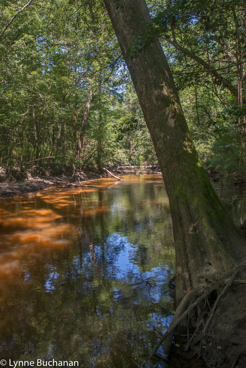 Salt Creek with Tannin