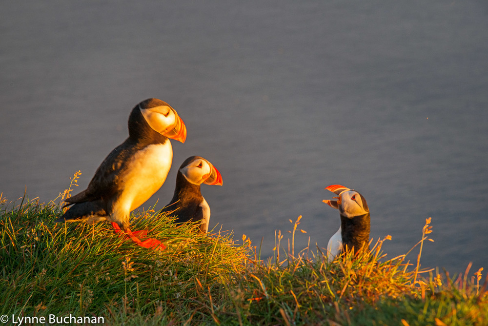 Puffin Summit