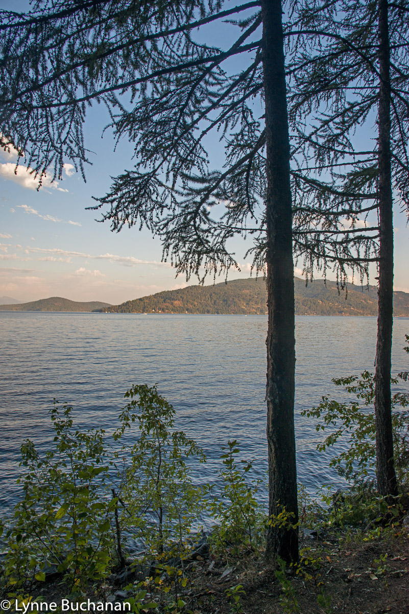 Through the Trees, Lake Pend Oreille