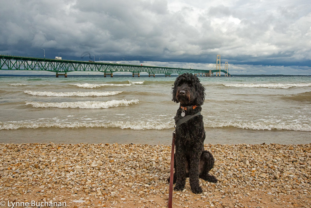 Takoda by the Mackinac Bridge