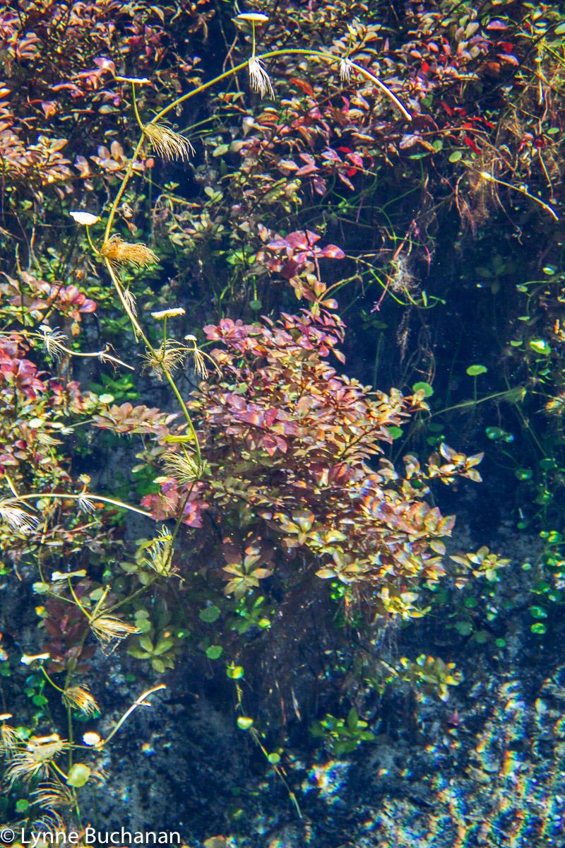 Naked Springs Vegetation