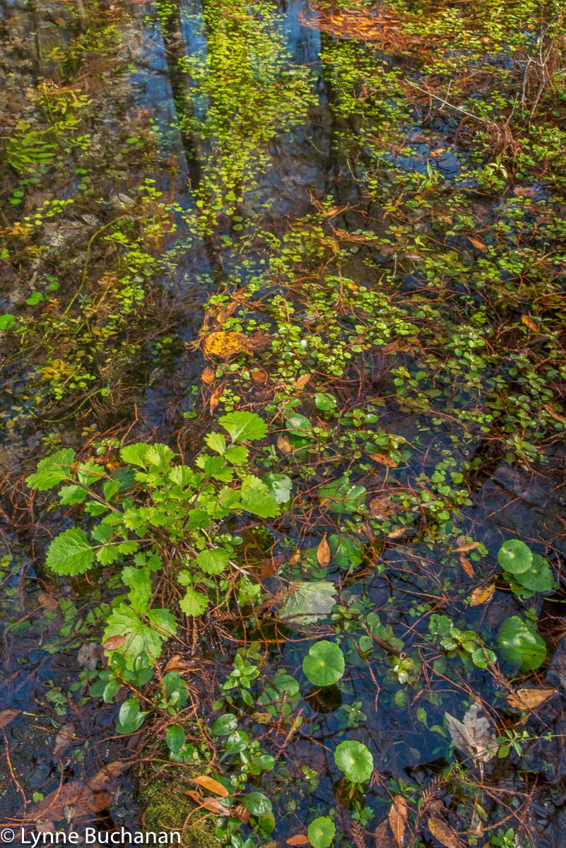Vegetation Near John Springs